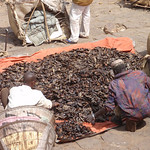 336_Mopti  Commodities to be Sold  Dried Fishes  Part 2