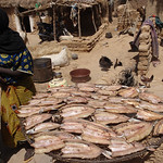 415_Niger River  A  Bozo Fishing Village  Dried Fishes  Part 5