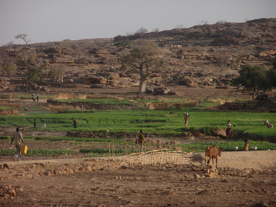 524_Dogon Country  Bongo Village  Onions Fields