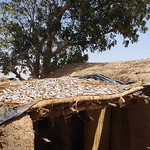 414_Niger River  A  Bozo Fishing Village  Dried Fishes  Part 4