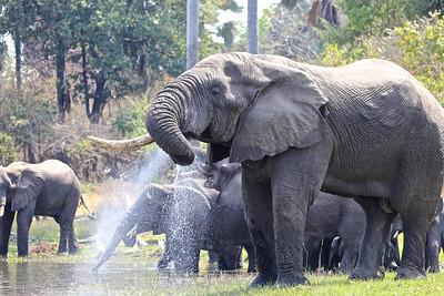 069_Liwonde National Park  Mvuu Camp  Central African Wilderness Safaris
