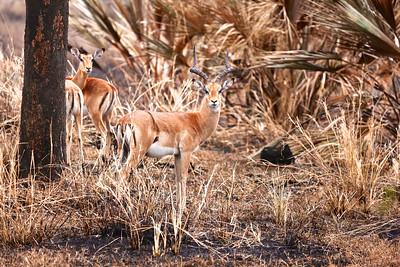 100_Gorongosa National Park