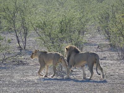 520_Etosha National Park  Eastern Side