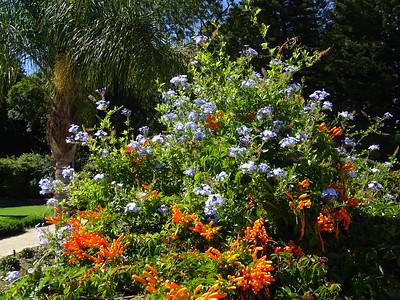 023_Windhoek  Government Gardens