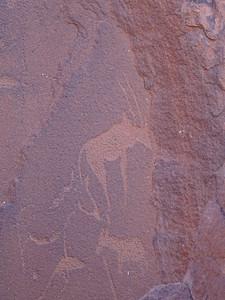 386_Twyfelfontein  Zieben Platten  Rock Engravings  Male Kudu