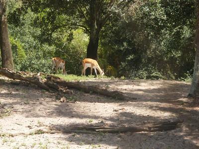 209 Jour 6, Animal Kingdom, Maharajah Jungle Trek