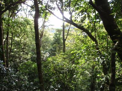 539_Monteverde  Cloud Forest  Natural Wonders Tram