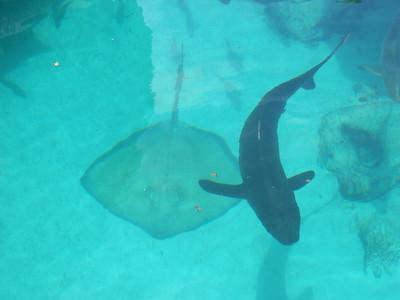 063_Nassau  Atlantis  Predator Tunnel