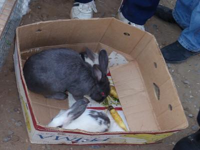 100_Ashgabat, Tolkuchka Oriental Bazaar  Sunday Market  Rabbits