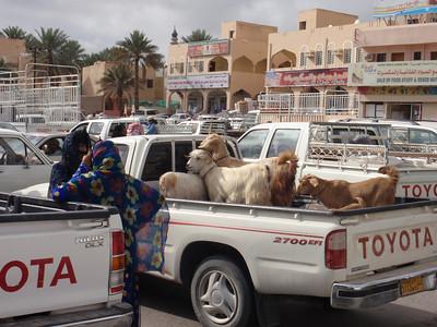 118_Nizwa Souq  The Thursday Livestock  Auction  Goats