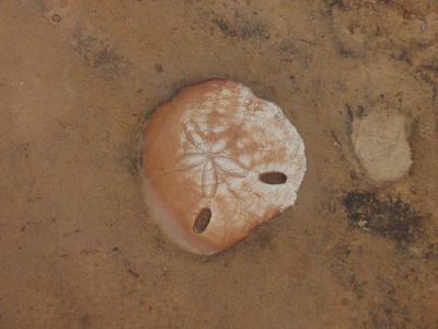 092_Yeliu Geopark  Fossils  Sand Pipes jpg